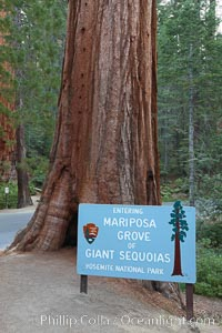 Marisposa Grove entrance.  Sign marking entrance to the Mariposa Grove of Giant Sequoia trees in southern Yosemite National Park