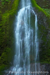 Marymere Falls drops 90 feet through an old-growth forest of Douglas firs, near Lake Crescent. Lake Crescent, Olympic National Park, Washington, USA, natural history stock photograph, photo id 13766