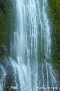 Marymere Falls drops 90 feet through an old-growth forest of Douglas firs, near Lake Crescent. Lake Crescent, Olympic National Park, Washington, USA, natural history stock photograph, photo id 13768