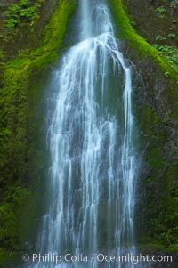 Marymere Falls drops 90 feet through an old-growth forest of Douglas firs, near Lake Crescent. Lake Crescent, Olympic National Park, Washington, USA, natural history stock photograph, photo id 13769