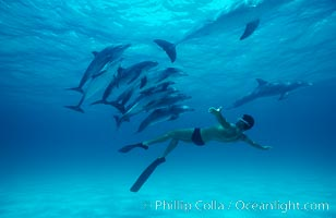 Atlantic spotted dolphin, Olympic swimmer Matt Biondi. Bahamas, Stenella frontalis, natural history stock photograph, photo id 00009
