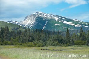Meadow, spruce trees and mountains, Lake Clark National Park, Alaska