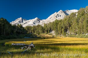 Meadow and Sierra Nevada peak Bear Creek Spire at sunrise, Little Lakes Valley, John Muir Wilderness, Inyo National Forest, Little Lakes Valley, Inyo National Forest