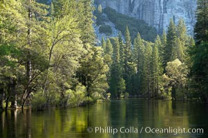 The Merced River, springtime flood and green trees, Yosemite Valley, Yosemite National Park, California