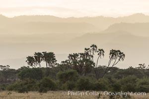 Meru National Park landscape. Meru National Park, Kenya, Hyphaene thebaica, natural history stock photograph, photo id 29639