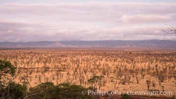 Meru National Park landscape. Meru National Park, Kenya, natural history stock photograph, photo id 29677