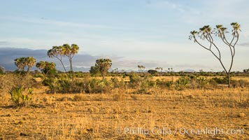 Meru National Park landscape. Meru National Park, Kenya, Hyphaene thebaica, natural history stock photograph, photo id 29679