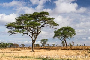 Meru National Park landscape