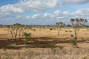 Meru National Park landscape. Meru National Park, Kenya, Hyphaene thebaica, natural history stock photograph, photo id 29712