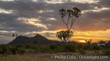 Meru National Park sunset, with Elsa's Kopje in the distance, landscape, Hyphaene thebaica