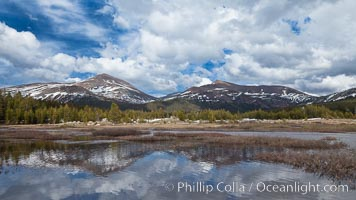 Mount Dana and Mount Gibbs reflected in the Dana Fork of the Tuolumne River. Yosemite National Park, California, USA, natural history stock photograph, photo id 26867