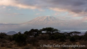 Mount Kilimanjaro, Tanzania, viewed from Amboseli National Park, Kenya. Amboseli National Park, Kenya, natural history stock photograph, photo id 29540