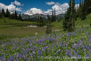 Mount Rainier and alpine wildflowers, Tipsoo Lakes, Mount Rainier National Park, Washington