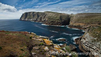Tall seacliffs overlook the southern Atlantic Ocean, a habitat on which albatross and penguin reside. New Island, Falkland Islands, United Kingdom, natural history stock photograph, photo id 23809