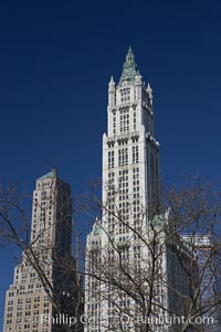 High rises tower over trees. Manhattan, New York City, New York, USA, natural history stock photograph, photo id 11119