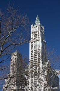 High rises tower over trees. Manhattan, New York City, New York, USA, natural history stock photograph, photo id 11120