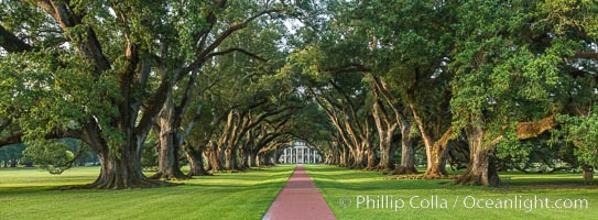 Oak Alley Plantation and its famous shaded tunnel of  300-year-old southern live oak trees (Quercus virginiana).  The plantation is now designated as a National Historic Landmark. Oak Alley Plantation, Vacherie, Louisiana, USA, natural history stock photograph, photo id 31018
