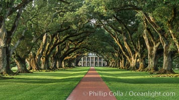 Oak Alley Plantation and its famous shaded tunnel of  300-year-old southern live oak trees (Quercus virginiana).  The plantation is now designated as a National Historic Landmark. Oak Alley Plantation, Vacherie, Louisiana, USA, natural history stock photograph, photo id 31019