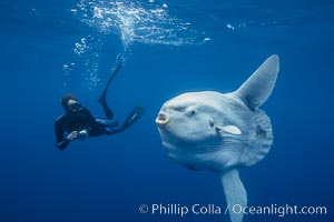 Ocean sunfish and photographer, open ocean. San Diego, California, USA, Mola mola, natural history stock photograph, photo id 03326
