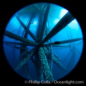Oil Rig Ellen and Elly, Underwater Structure. Long Beach, California, USA, natural history stock photograph, photo id 34657
