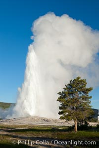 Old Faithful geyser, sunrise.  Reaching up to 185' in height and lasting up to 5 minutes, Old Faithful geyser is the most famous geyser in the world and the first geyser in Yellowstone to be named, Upper Geyser Basin, Yellowstone National Park, Wyoming