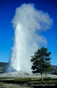 Old Faithful geyser, peak eruption, Upper Geyser Basin, Yellowstone National Park, Wyoming