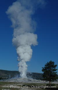 Old Faithful geyser during steam phase that follows the main eruption, Upper Geyser Basin, Yellowstone National Park, Wyoming