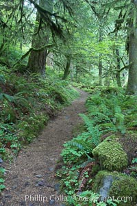 Hiking trails through a temperature rainforest in the lush green Columbia River Gorge, Oneonta Gorge, Columbia River Gorge National Scenic Area, Oregon