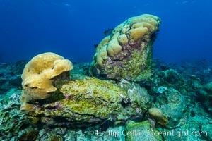 Overturned Porites Lobata Coral Head, Clipperton Island, Porites lobata