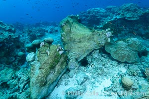 Enormous Porites lobata coral head, overturned by storm surge, Clipperton Island, Porites lobata