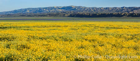 A Panorama of Wildflowers blooms across Carrizo Plains National Monument, during the 2017 Superbloom. Carrizo Plain National Monument, California, USA, natural history stock photograph, photo id 33229