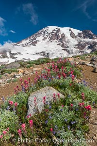 Paradise Meadows, wildflowers and Mount Rainier, summer, Mount Rainier National Park, Washington
