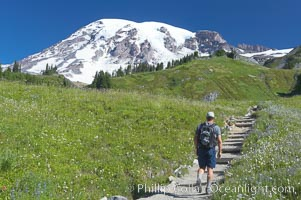 Hiker, Paradise Meadows, Mount Rainier National Park, Washington