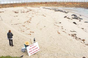 A La Jolla Friends of the Seals volunteer encourages visitors to stay away from the harbor seals at Childrens Pool in La Jolla, California while videotaping those who approach the seals.  The La Jolla colony of harbor seals, which has formed a breeding colony at a small but popular beach near San Diego, is at the center of considerable controversy.  While harbor seals are protected from harassment by the Marine Mammal Protection Act and other legislation, local interests would like to see the seals leave so that people can resume using the beach, Phoca vitulina richardsi
