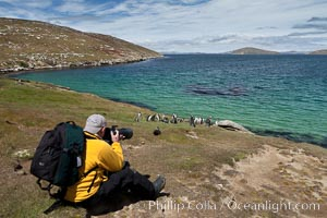 Photographer Al Bruton, photographing Magellanic penguins on grasslands above the ocean, New Island