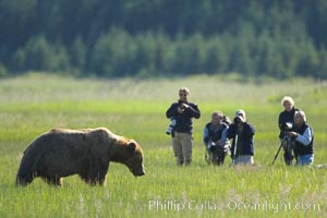 Photographers and brown bear. Lake Clark National Park, Alaska, USA, natural history stock photograph, photo id 19075