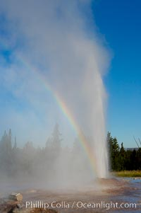 A rainbow appears in the spray of Pink Cone Geyser.  Pink Cone Geyser reaches 30 feet in height, and has highly variable interval and duration.  It is a cone-type geyser and its cone has a pinkish tint due to manganese oxide in it.  Firehole Lake Drive, Lower Geyser Basin, Yellowstone Park, Yellowstone National Park, Wyoming