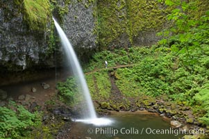 Ponytail Falls, where Horsetail Creeks funnels over an overhang below which hikers can walk, Columbia River Gorge National Scenic Area, Oregon