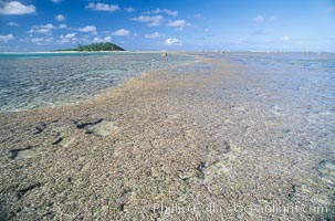 coralline algae reef, Porolithon, Rose Atoll National Wildlife Sanctuary