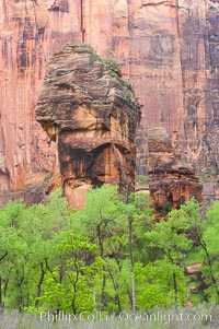 The Preacher and the Pulpit, a pair of freestanding sandstone columns in the Temple of Sinawava, are surrounded by cottonwoods with their deep green spring foliage. Zion Canyon, Zion National Park, Utah