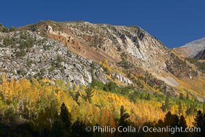 The Hunchback, a peak rising above the South Fork of Bishop Creek Canyon, with yellow and orange aspen trees changing to their fall colors. Bishop Creek Canyon, Sierra Nevada Mountains, Bishop, California, USA, Populus tremuloides, natural history stock photograph, photo id 23328