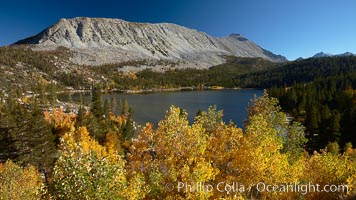 Mount Morgan and Rock Creek Lake with changing aspens, fall colors, autumn. Rock Creek Canyon, Sierra Nevada Mountains, California, USA, Populus tremuloides, natural history stock photograph, photo id 23330