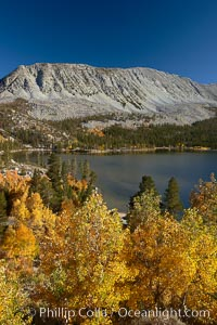 Mount Morgan and Rock Creek Lake with changing aspens, fall colors, autumn, Populus tremuloides, Rock Creek Canyon, Sierra Nevada Mountains