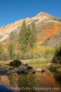 Paiute Peak, covered with changing aspen trees in autumn, rises above the calm reflecting waters of North Lake. Bishop Creek Canyon, Sierra Nevada Mountains, Bishop, California, USA, Populus tremuloides, natural history stock photograph, photo id 23367