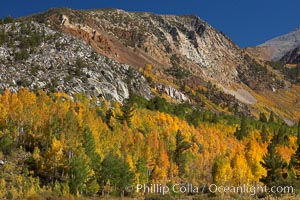 The Hunchback, a peak rising above the South Fork of Bishop Creek Canyon, with yellow and orange aspen trees changing to their fall colors, Populus tremuloides, Bishop Creek Canyon, Sierra Nevada Mountains