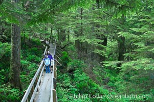 Hikers admire the temperate rainforest along the Rainforest Trail in Pacific Rim NP, one of the best places along the Pacific Coast to experience an old-growth rain forest, complete with western hemlock, red cedar and amabilis fir trees. Moss gardens hang from tree crevices, forming a base for many ferns and conifer seedlings, Pacific Rim National Park, British Columbia, Canada