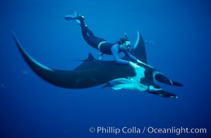 Manta ray and freediver, Manta birostris, San Benedicto Island (Islas Revillagigedos)