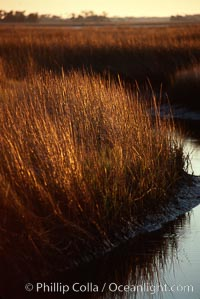 River grass, Crystal River, Florida