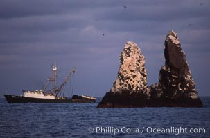 Illegal fishing at Roca Partida, Revillagigedos., natural history stock photograph, photo id 05623
