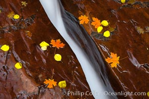 Water rushes through a narrow crack, in the red sandstone of Zion National Park, with fallen autumn leaves